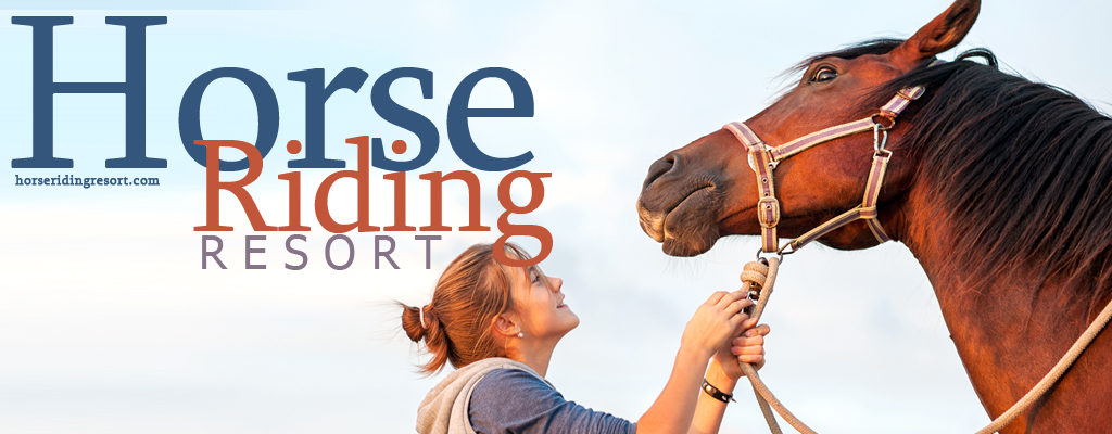 New or used saddle : what is best for show jumping?